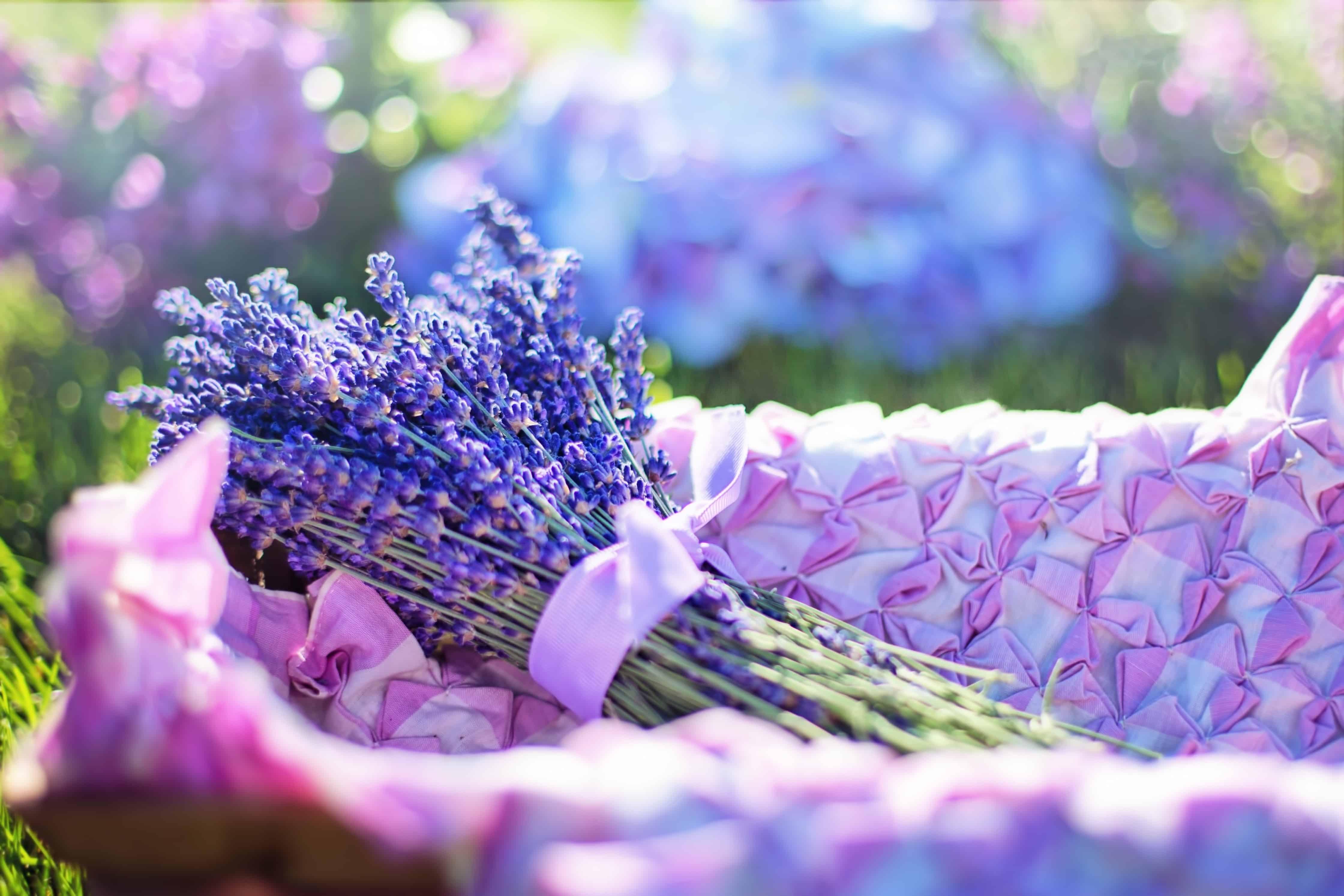 Lavender market, Valensole Plateau in Provence, lavender fields France, Valensole France, lavender fields france season, best time to visit lavender fields france