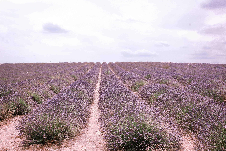Lavendel åkre i Provence i Frankrike, Lavendel marked i Provence, Lavendel i Provence, Aix-en-Provence, romantisk tur til Provence, ting å gjøre i Provence, langhelg i Provence, weekendtur til Provence, ferie i Provence, ting å gjøre i Provence, lavendel i Provence, dagsturer i Provence
