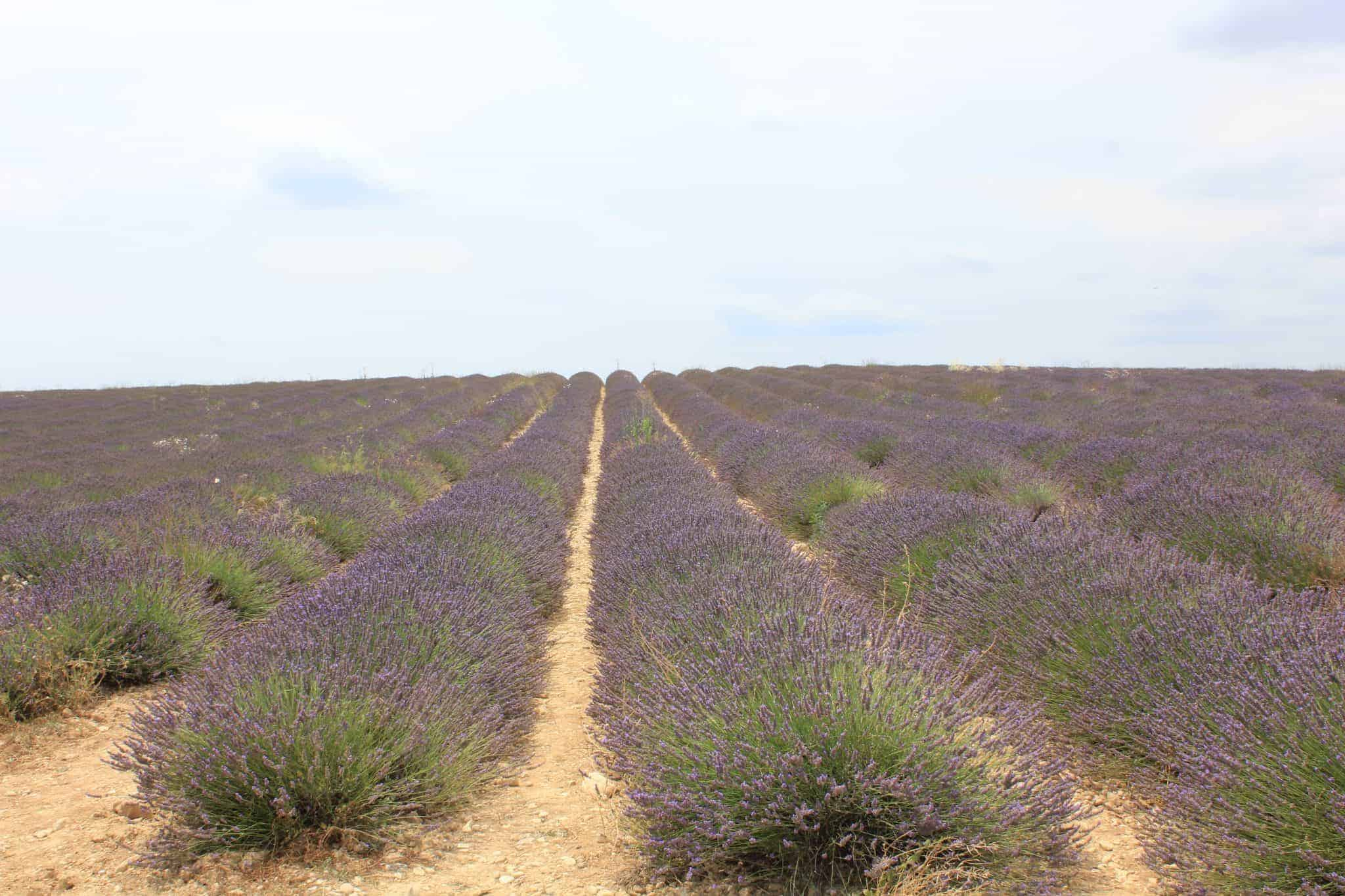 Lavendelåker i Frankrike, norsk reiseblogg, norsk reiseblogger
