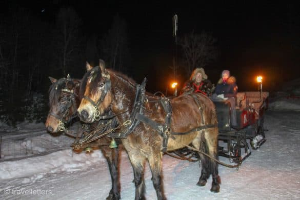 Sleigh ride horses, Norway in winter, Beitostølen ski resort Norway