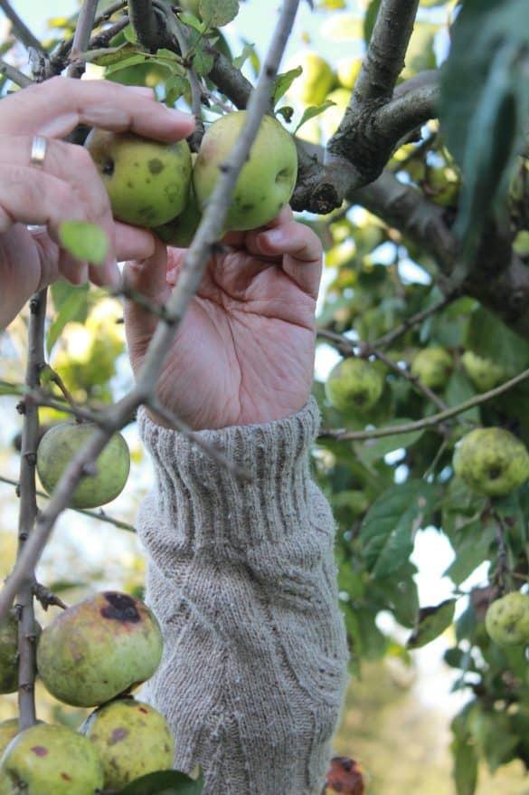 Asturias, Nord-Spania, Spania, gijon, cider